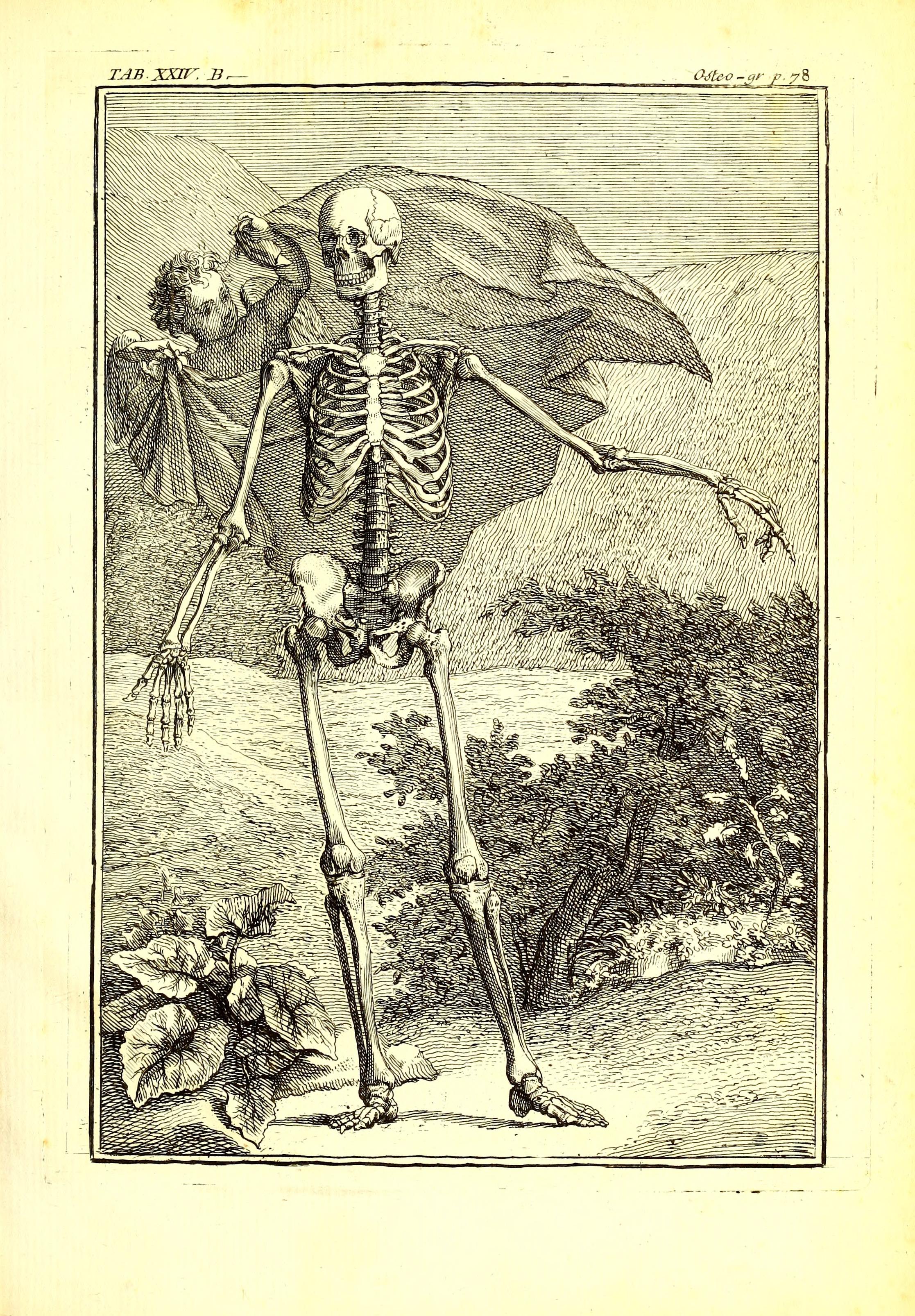 File ost o graphie ou description des os de l 39 adulte du for Interieur du corps humain photo