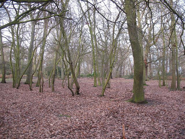 Oxleas Wood Wikipedia