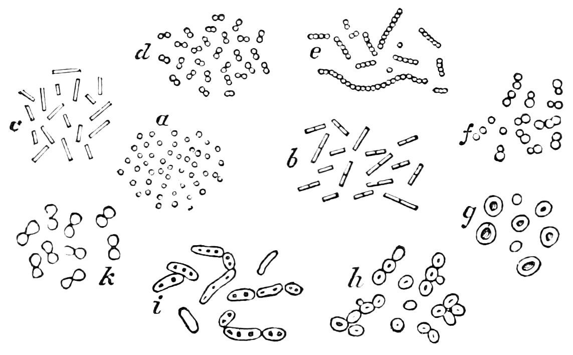 Bacteria picture