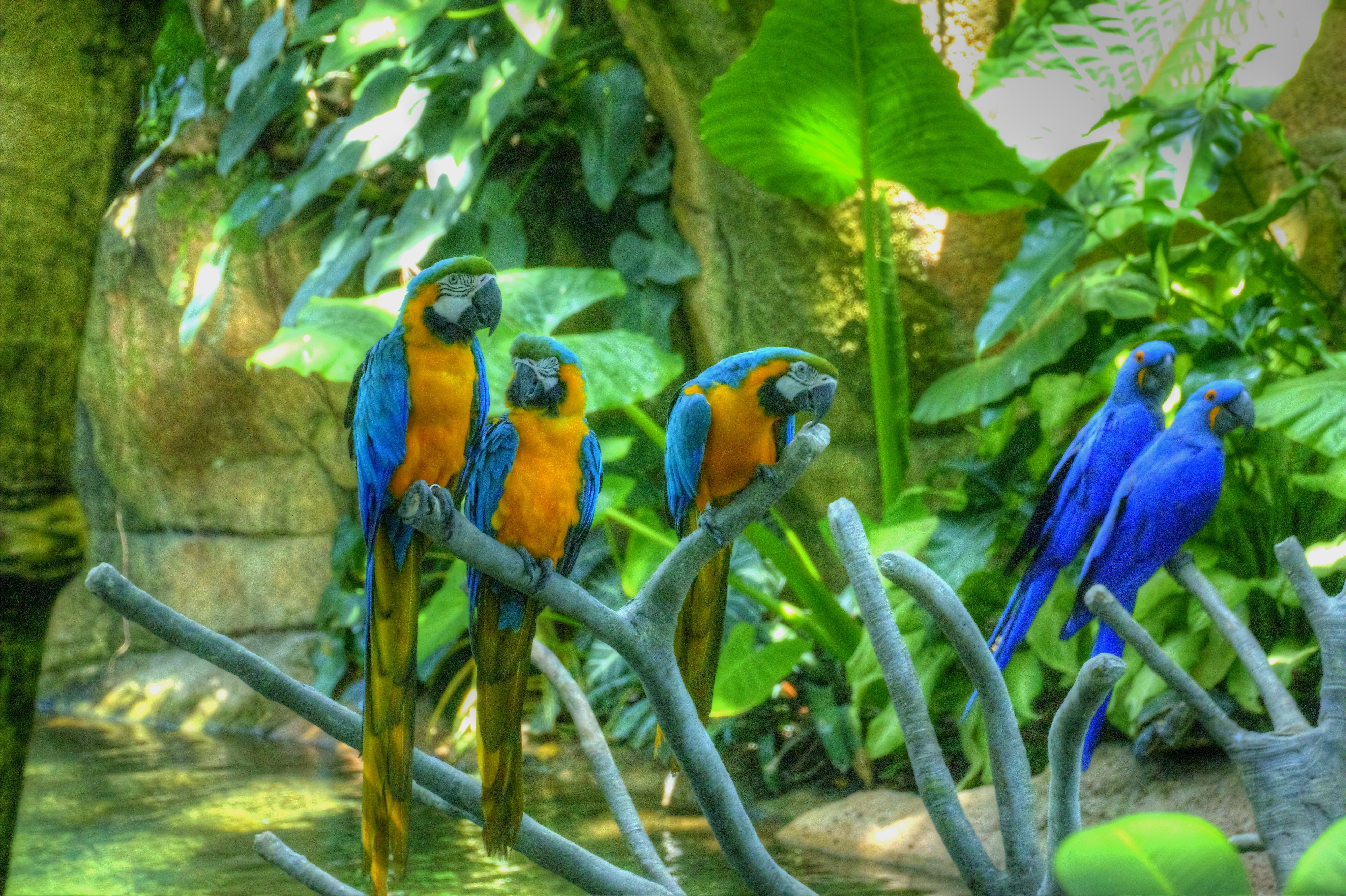 File:Parrots, Moody Garden, Galveston, Texas (6151937580)