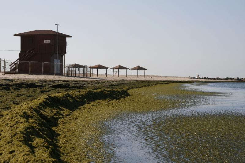 אצות חיפה