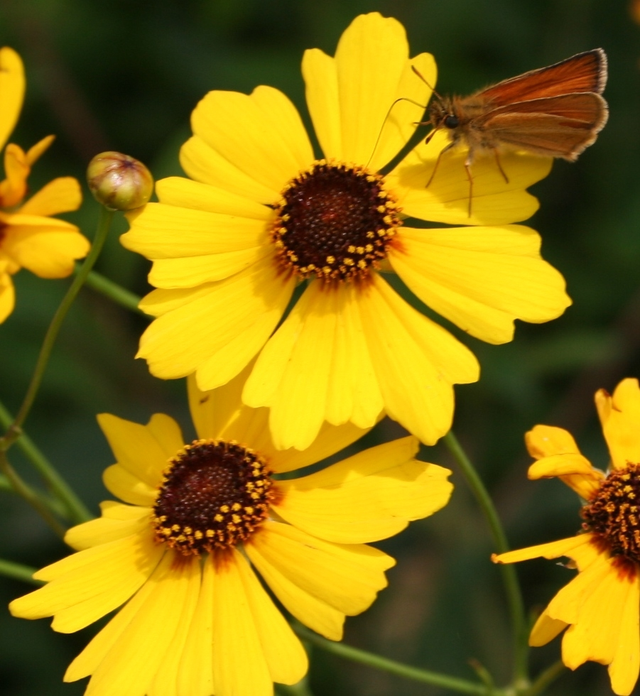 Filepretty Flowers 6330342796g Wikimedia Commons