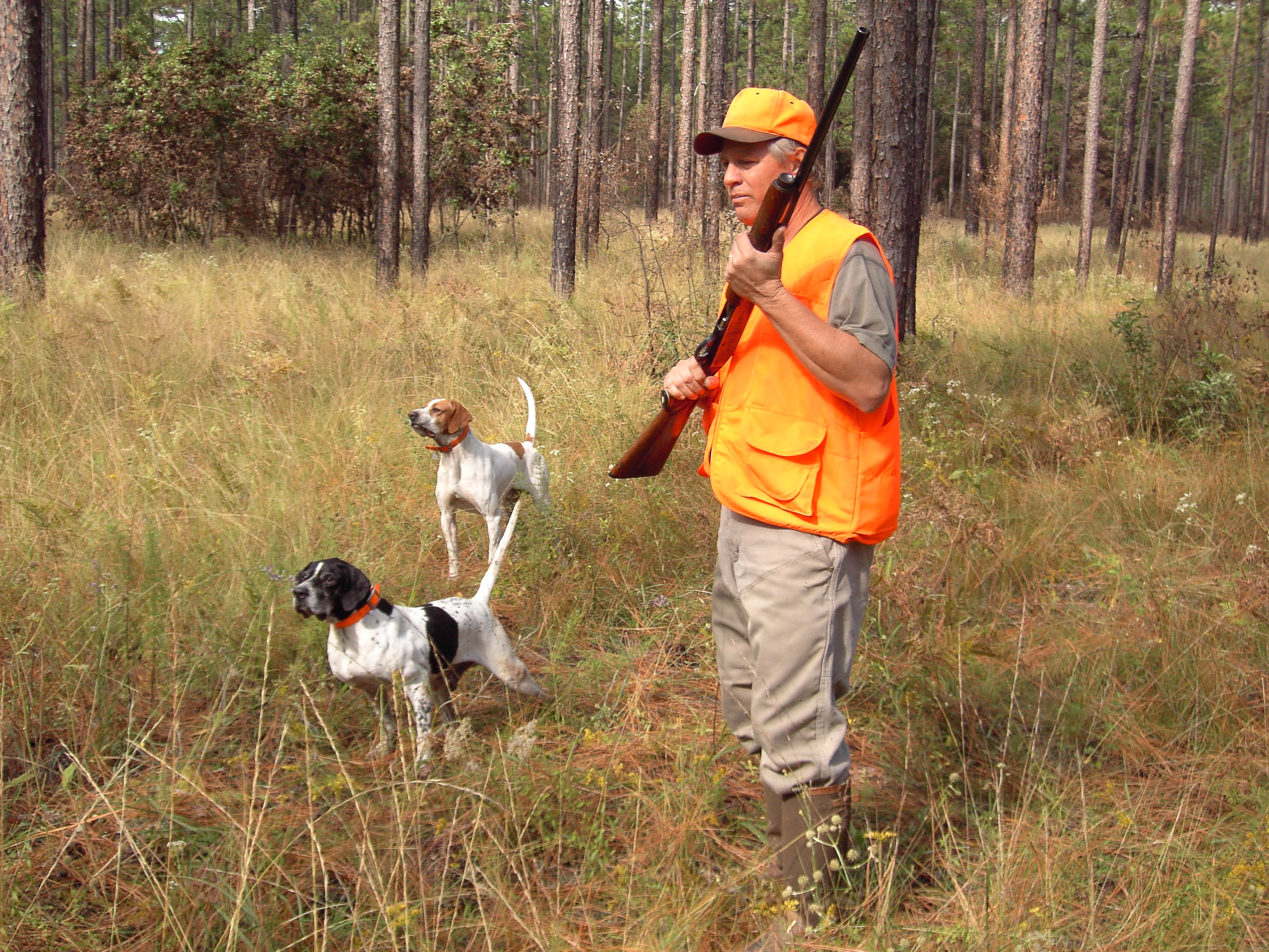 FileQuail Hunting With Dogs