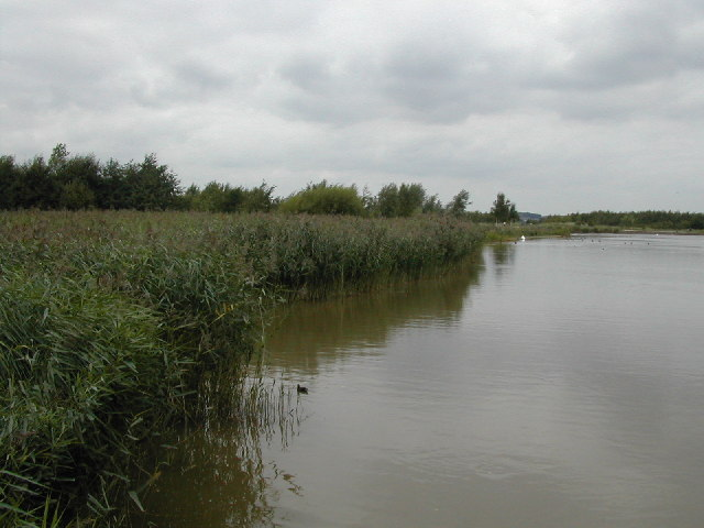 Reed Beds in Rushcliffe Country Park - geograph.org.uk - 55390