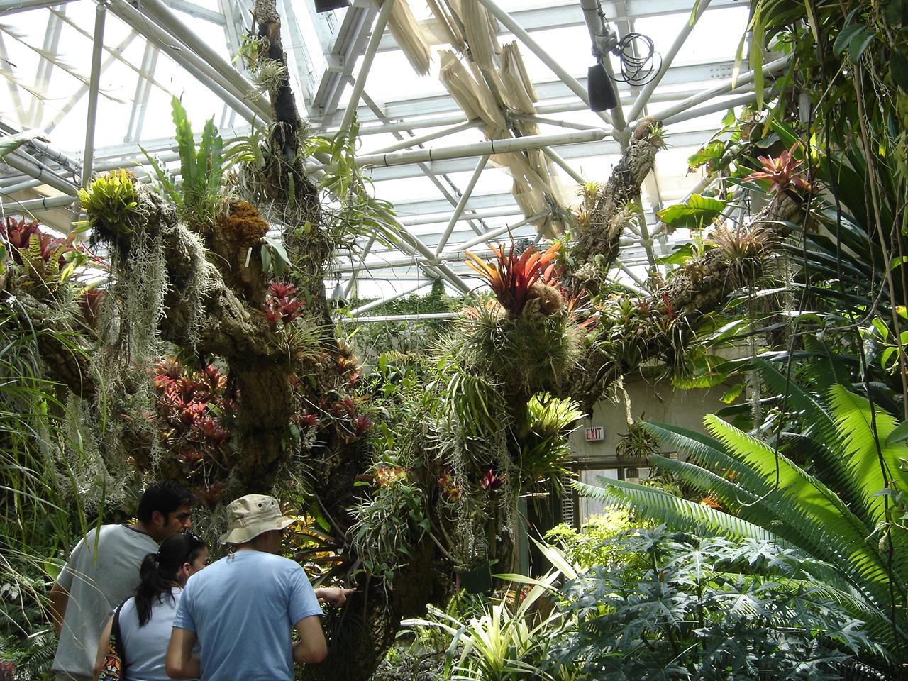 Jard n bot nico de san antonio wikipedia la - Jardin botanico las palmas ...