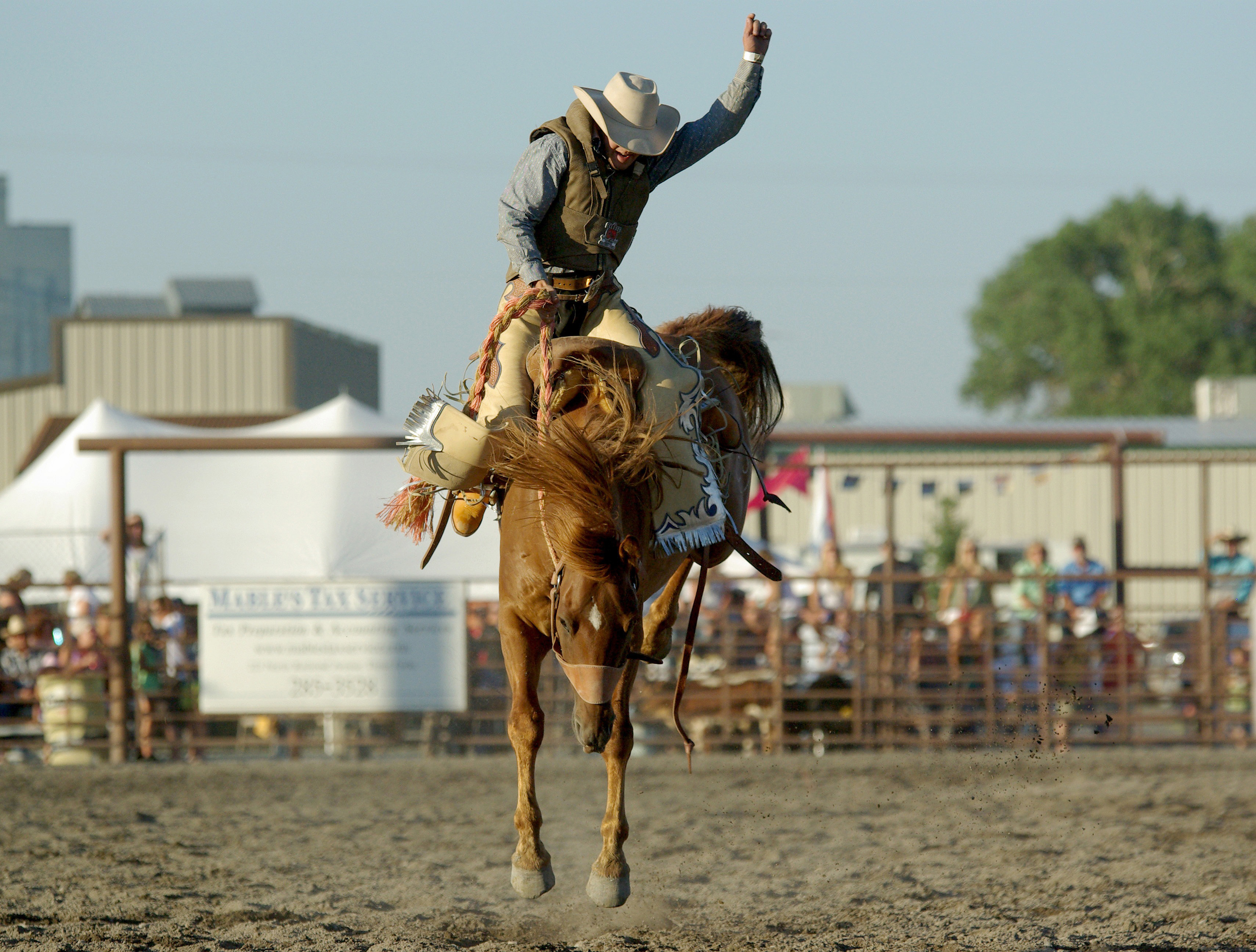 Bucking horse - Wikipedia
