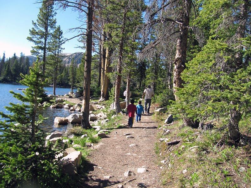 File:Salt Lake City Forest.JPG