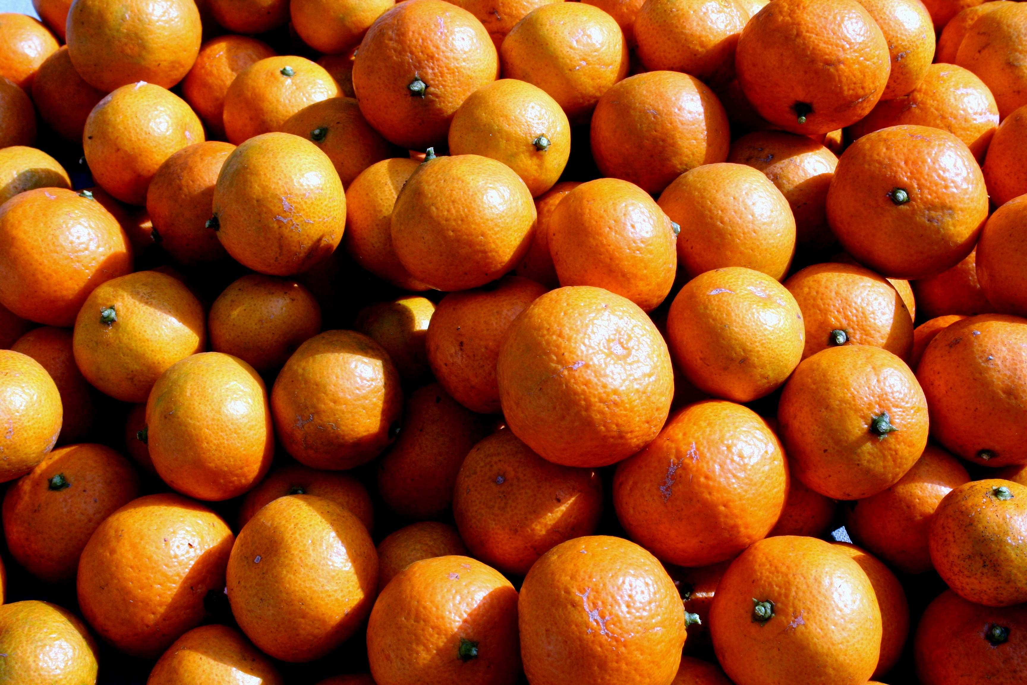Oranges In The Blender For Cake Recipe