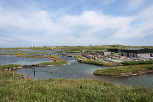 South Walney Oyster Farm - geograph.org.uk - 839281