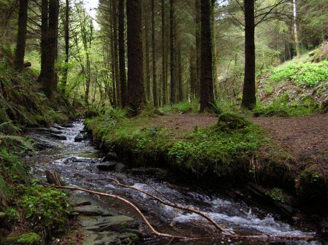 Stream In Cardinham Woods - geograph.org.uk - 23244