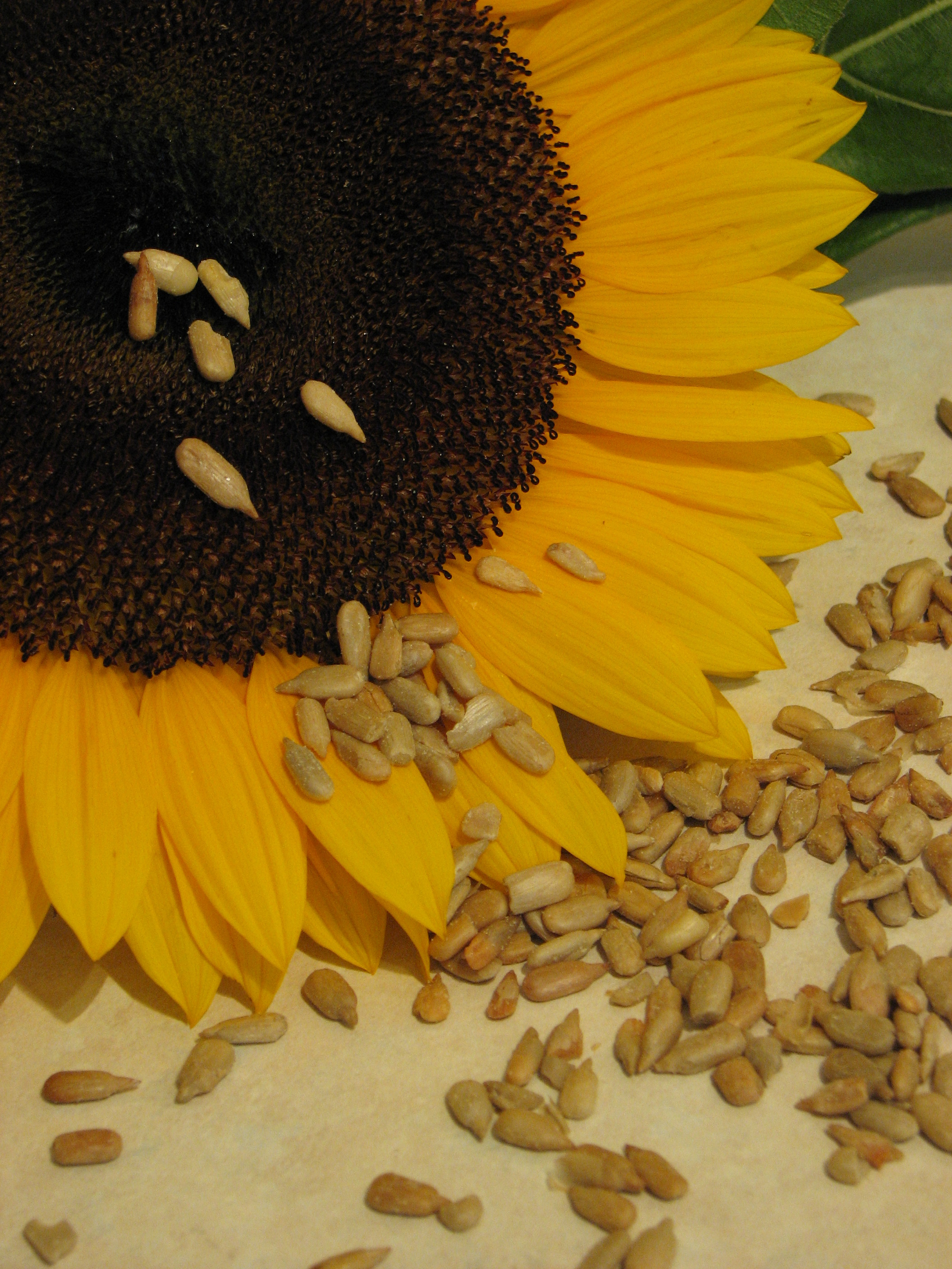 File Sunflower And Seeds Jpg