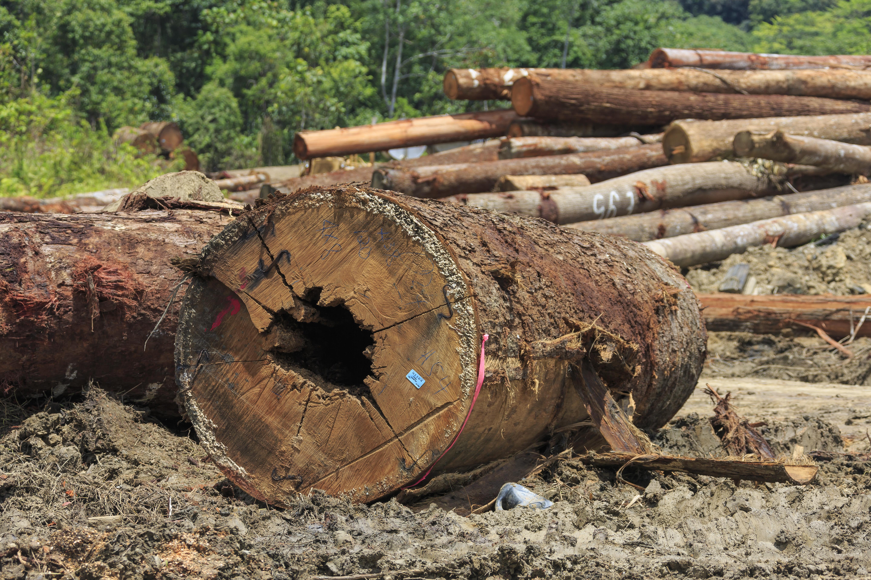 30% of Earth's Tree Species Nearly Extinct