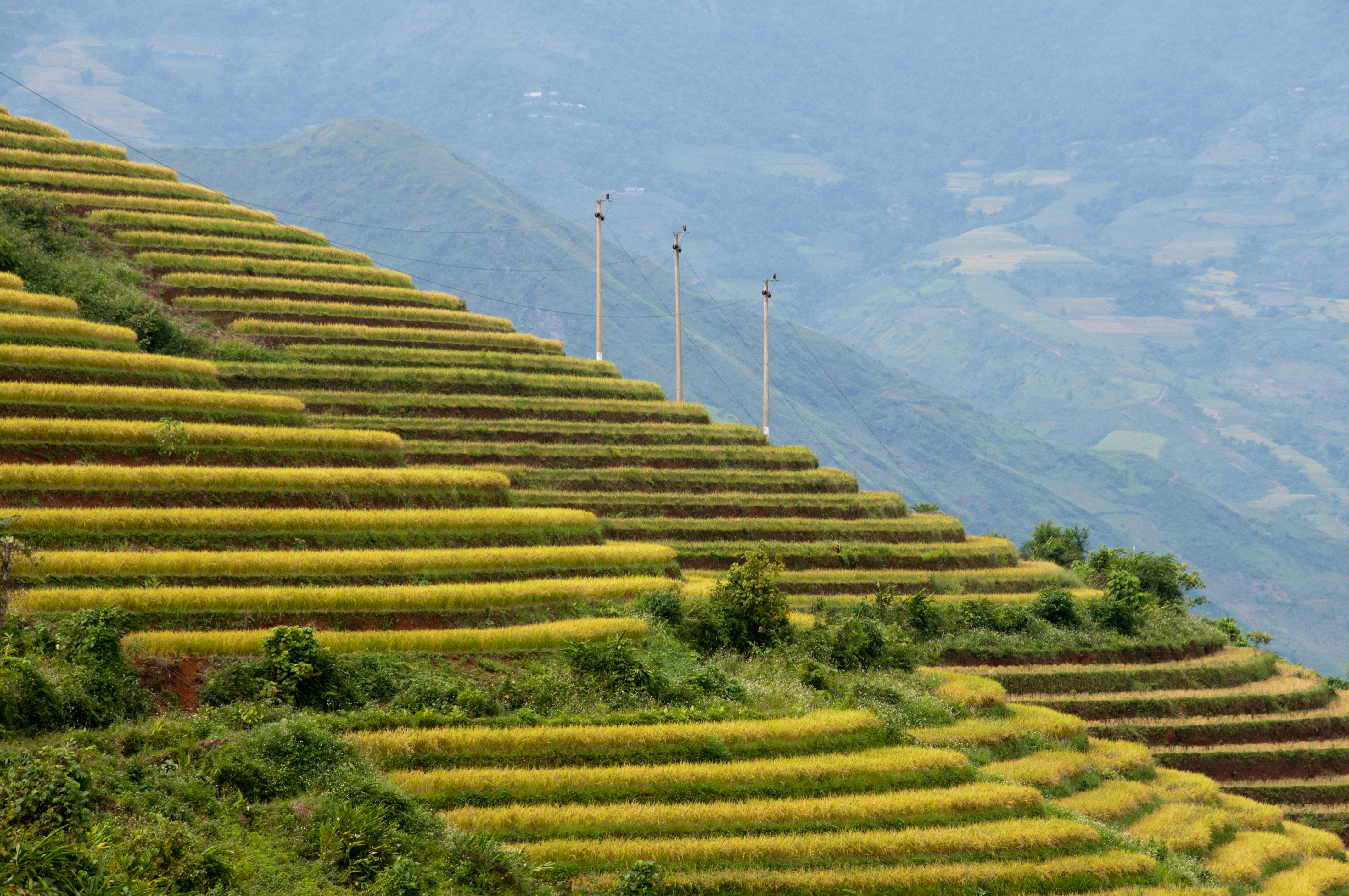 File terraced fields sa pa wikimedia commons for What is terracing