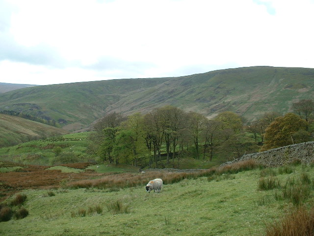 Trough of Bowland - geograph.org.uk - 69044