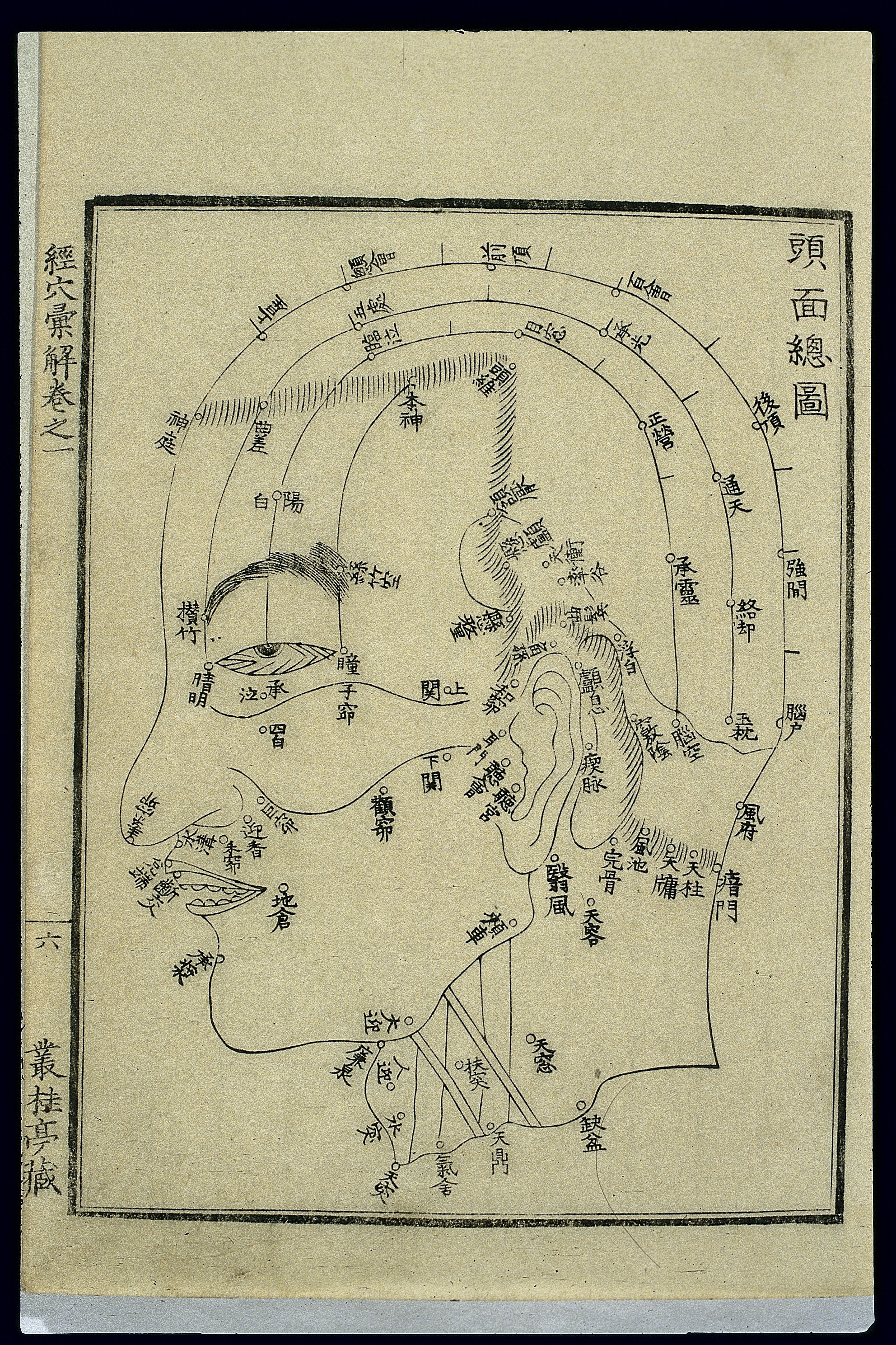 Head Size Conversion Chart: Acu-moxa chart; points of the head and face Japanese woodcut ,Chart