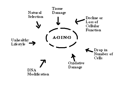 telemeres and the aging effect essay 1 job stress can damage cells, leading to early aging a 2012 study, published in the journal plos one, found that work-related exhaustion can can have a harmful effect on critical dna in the cells researchers measured the length of dna sections called telomeres, and found that individuals with.