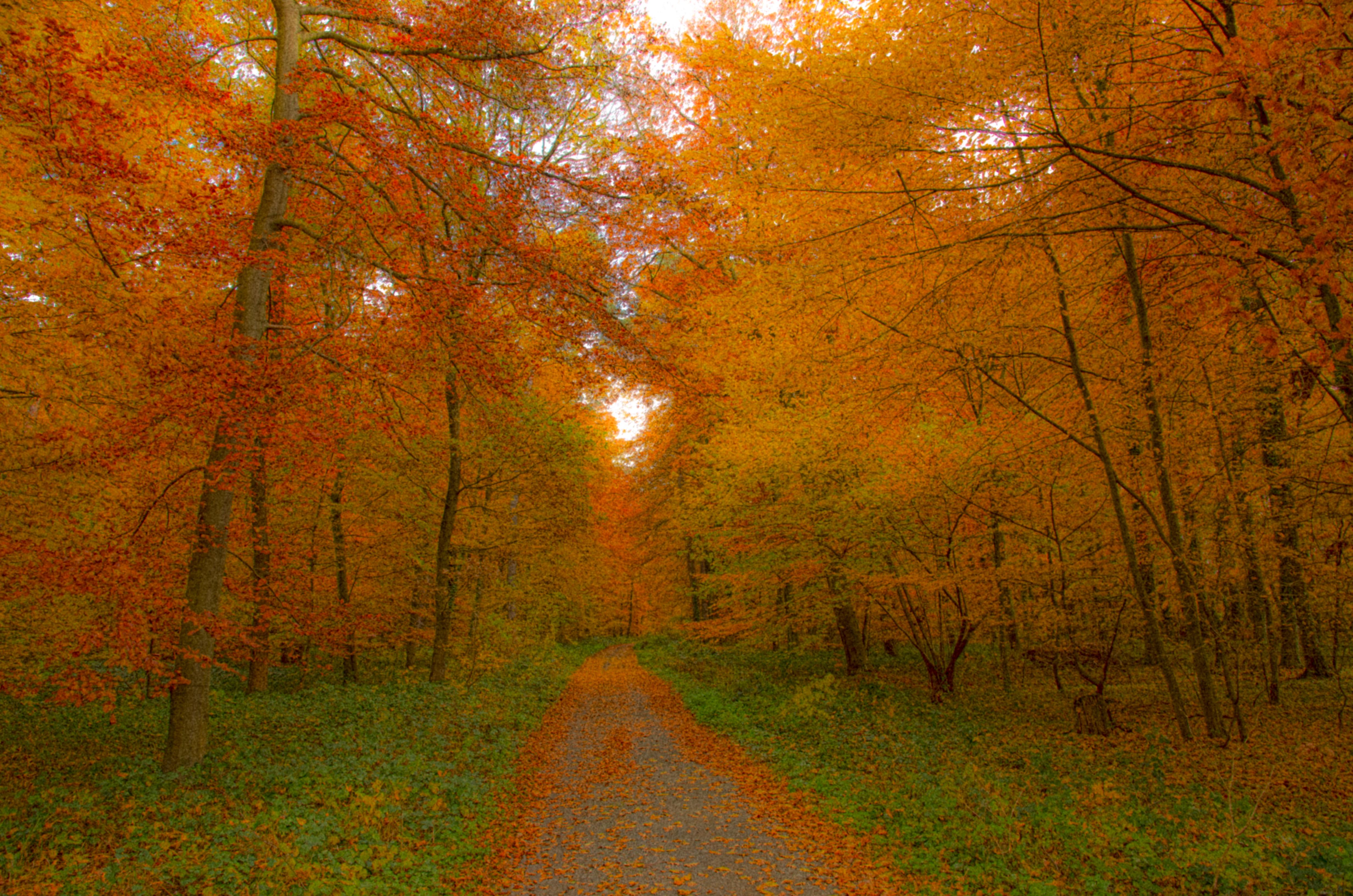 Beschreibung autumnal deciduous forest laubwand im herbst