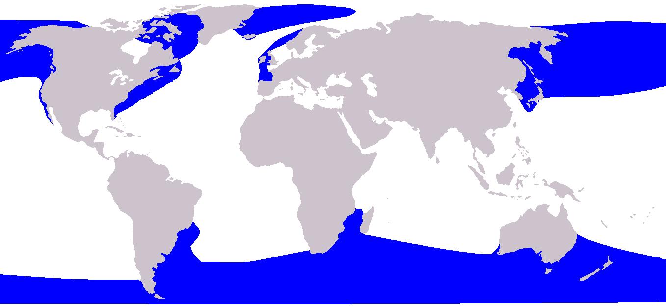 Blue Whale Wikipedia Autos Post