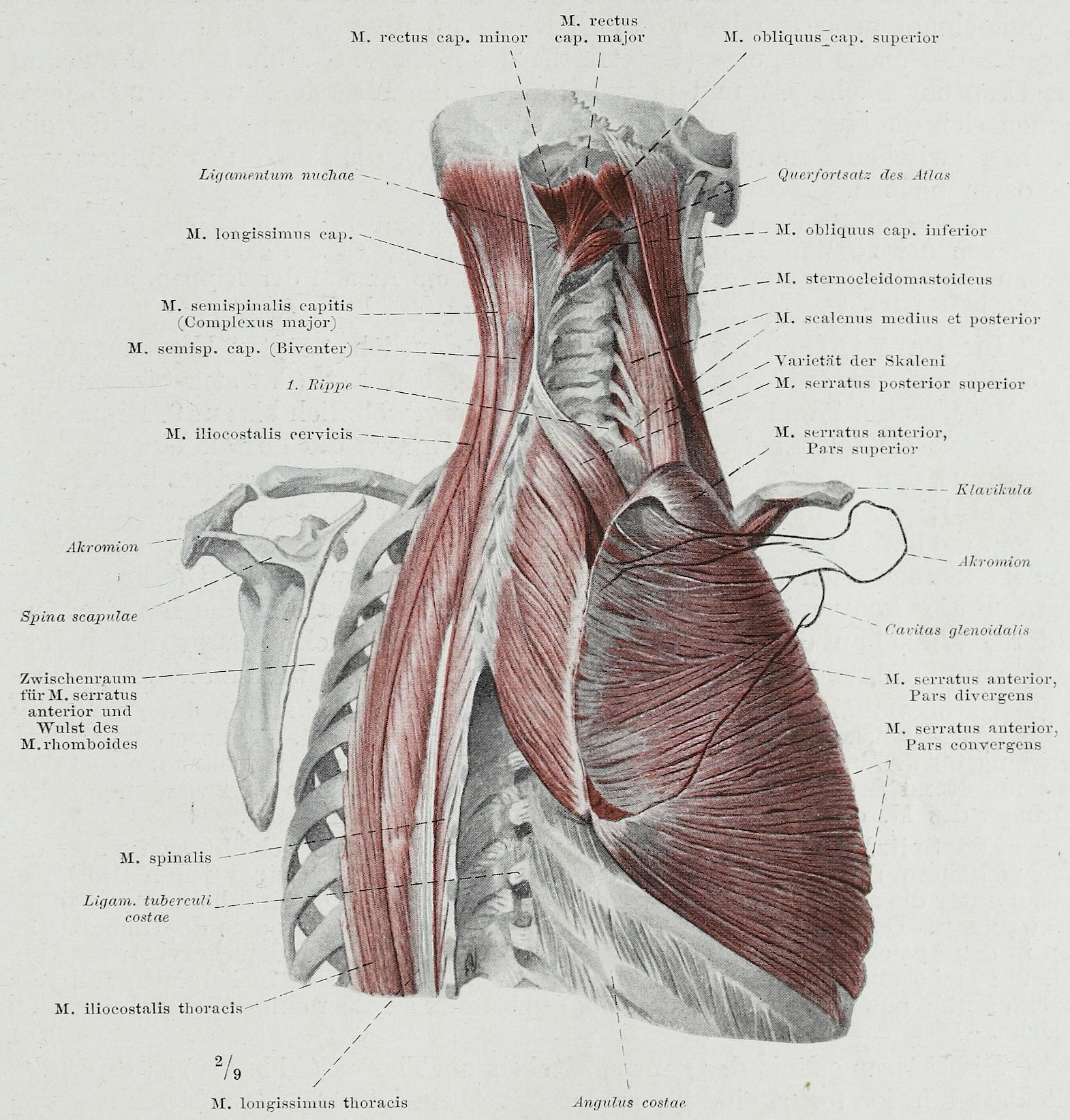File:Braus 1921 140.png - Wikimedia Commons