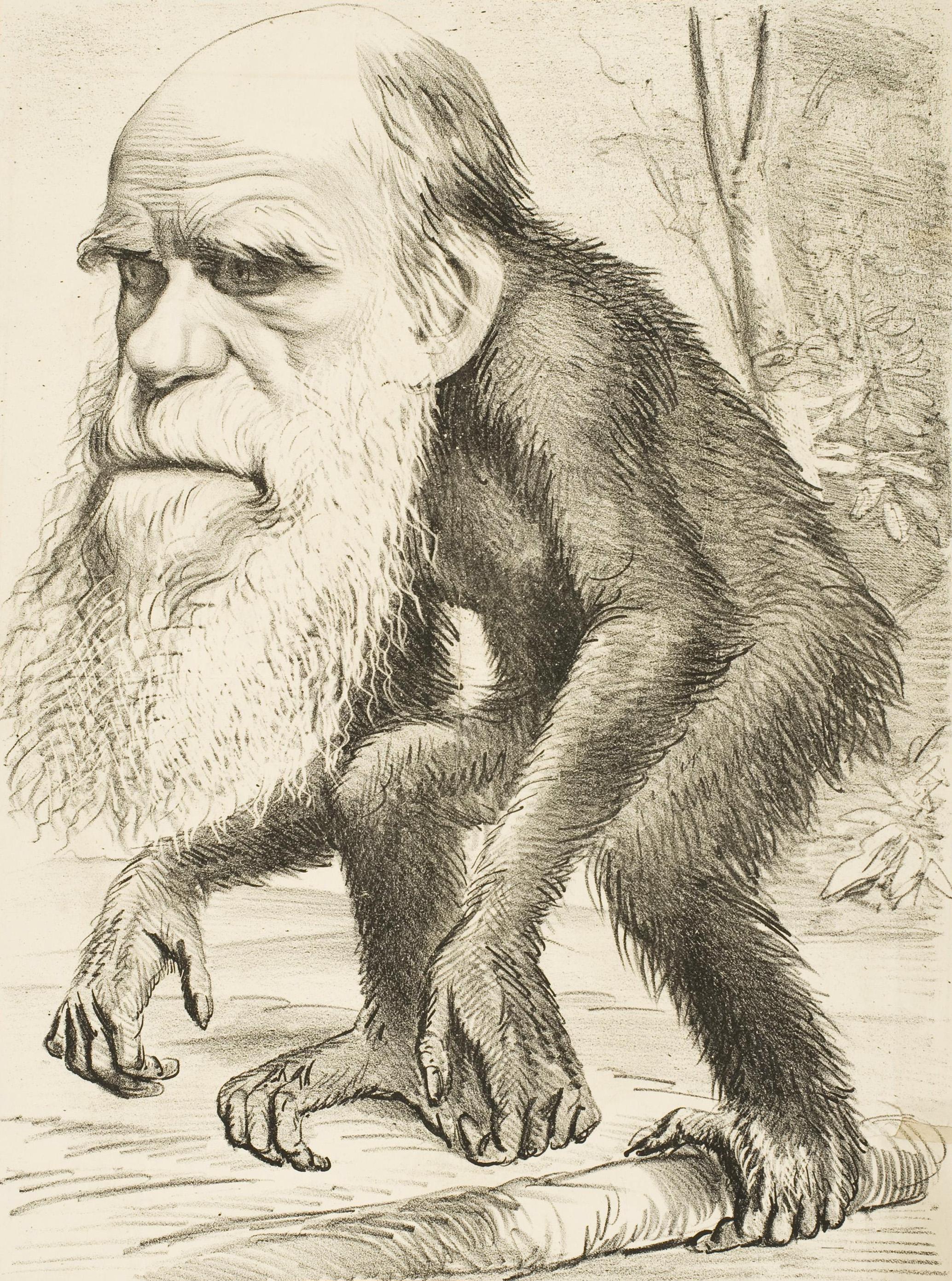 קריקטורה לעגנית על צ'רלס דארווין - הוגה תורת אבולוציה