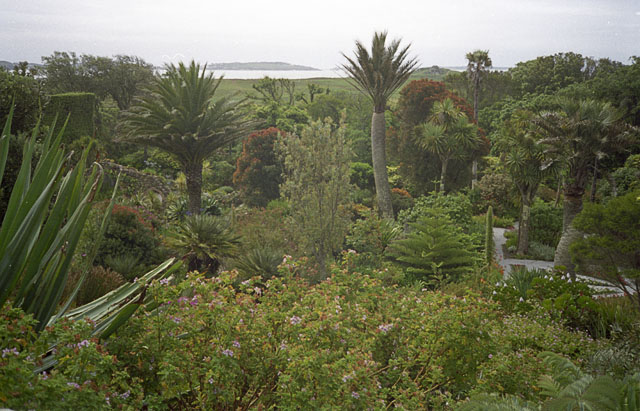 Exotic trees in Tresco Abbey Gardens - geograph.org.uk - 1715769