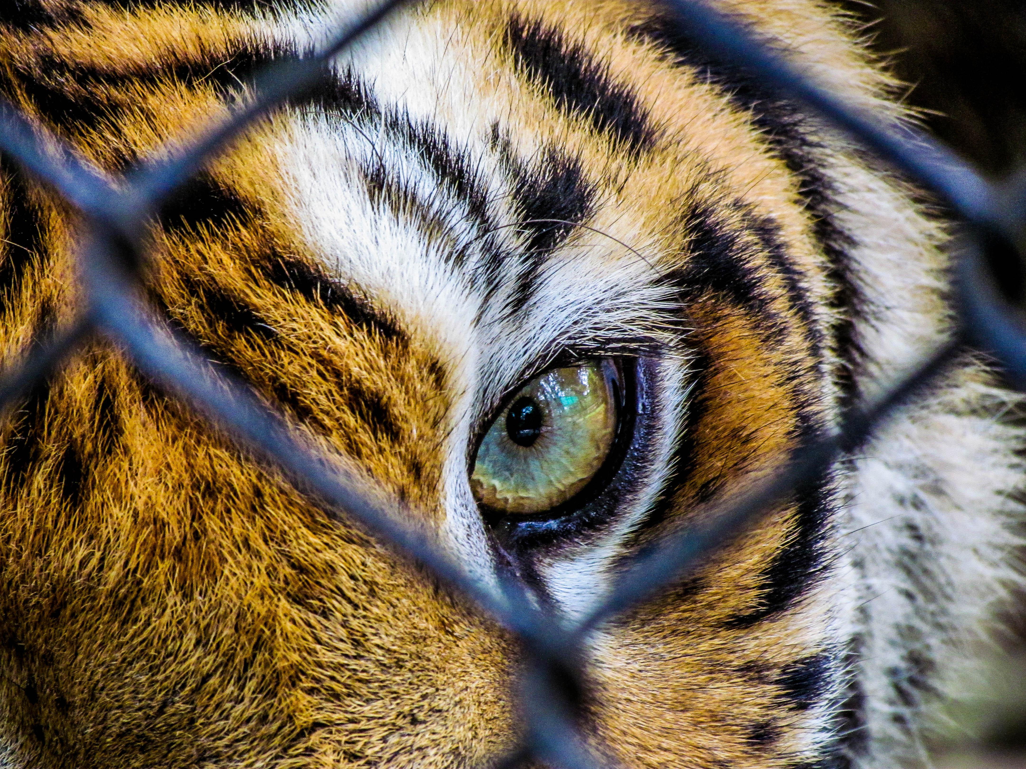 helm tigers eye repeat - HD4320×3240