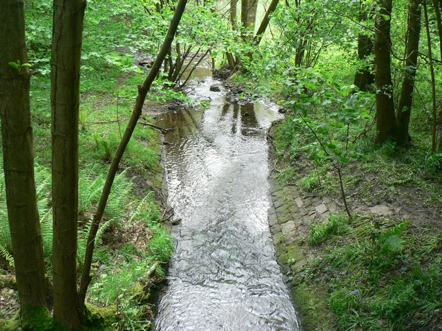 Greystone Beck in Lindley Wood - geograph.org.uk - 176468