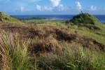 Guam's grassland.