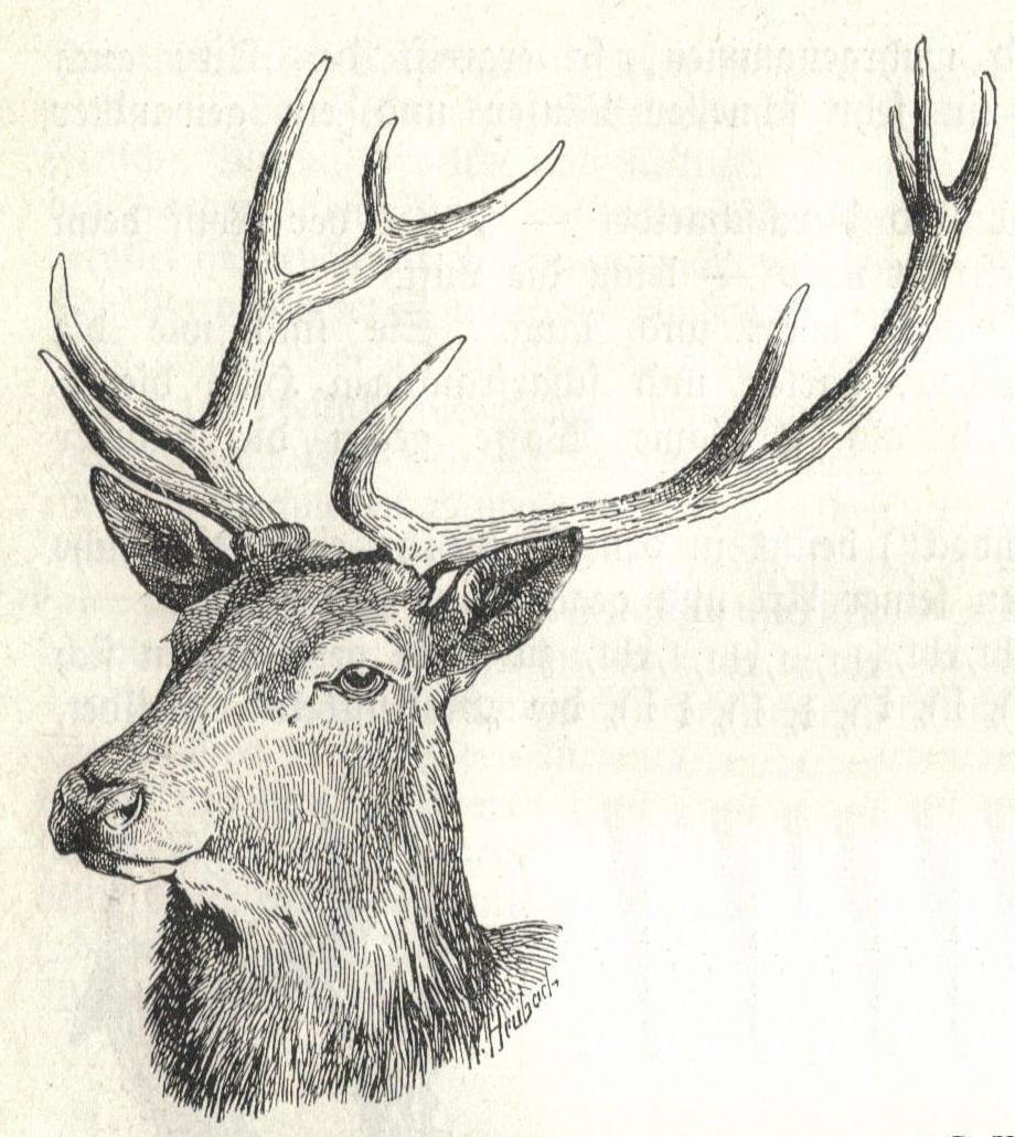 Reindeer head drawing - photo#21