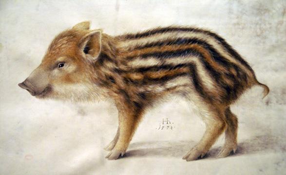 Hoffmann, Hans - A Wild Boar Piglet - 1578
