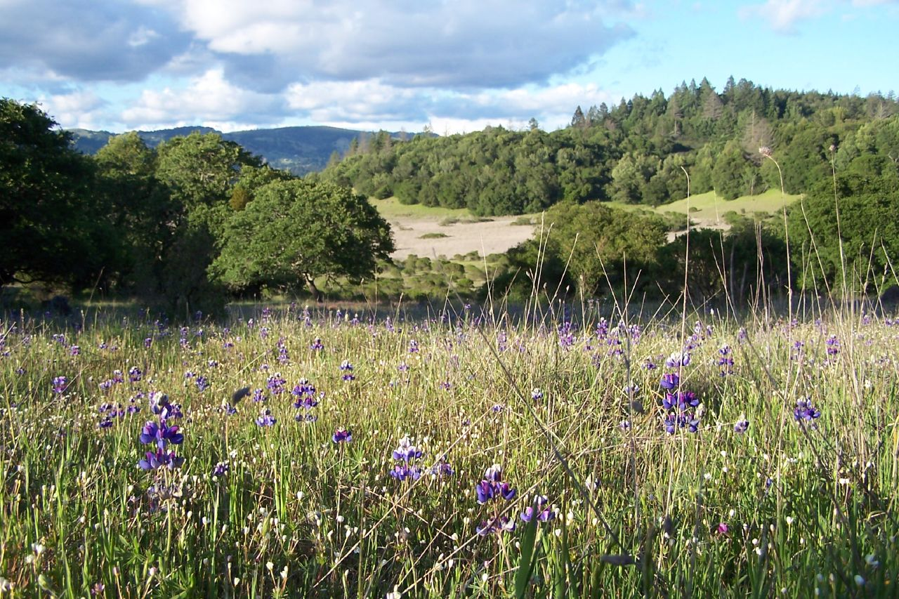 Trione-Annadel State Park - Wikipedia