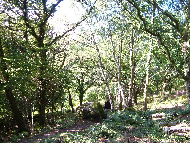Lustleigh Cleave near Heaven's Gate - geograph.org.uk - 127078