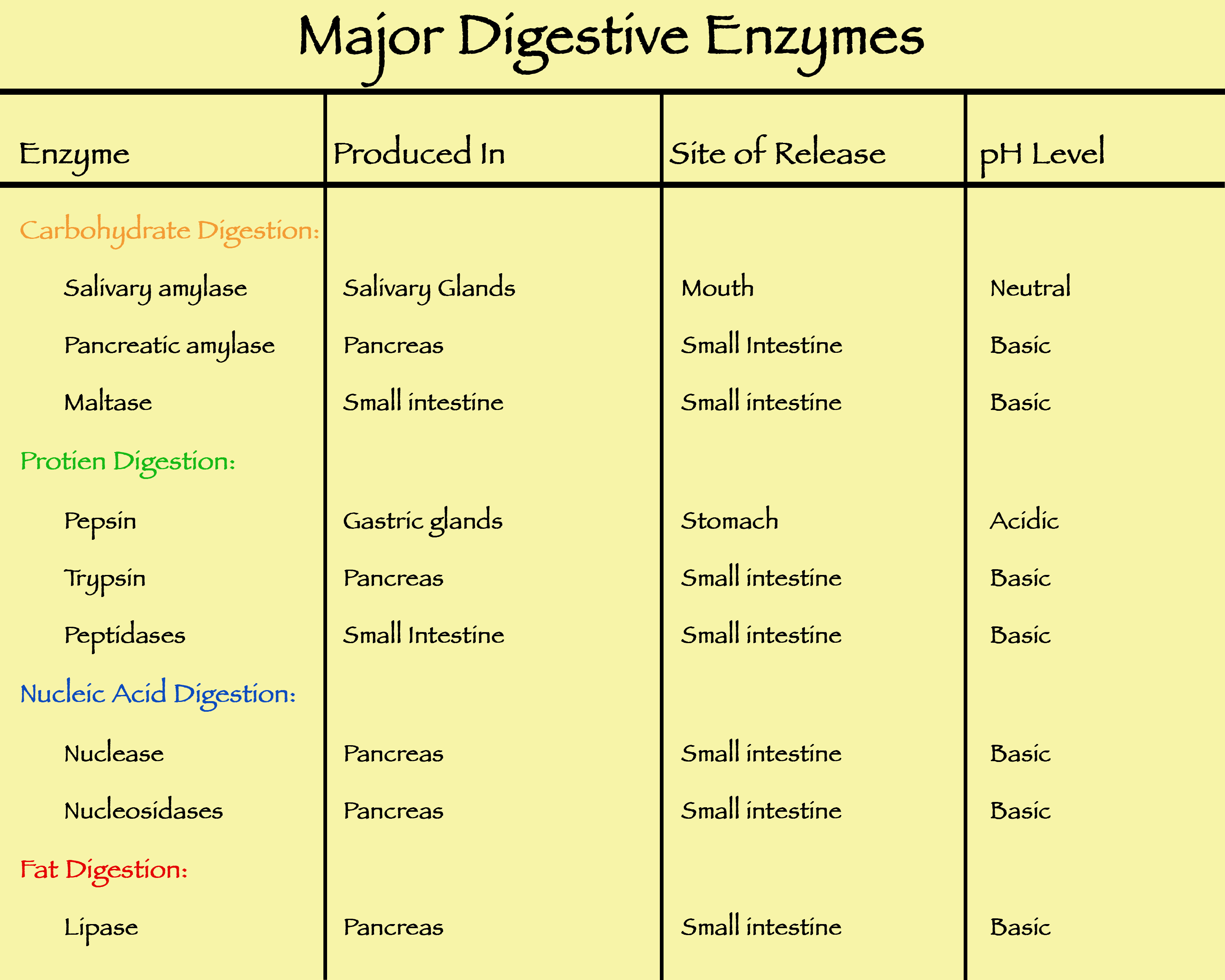 Name the digestive enzyme in the gastric juice