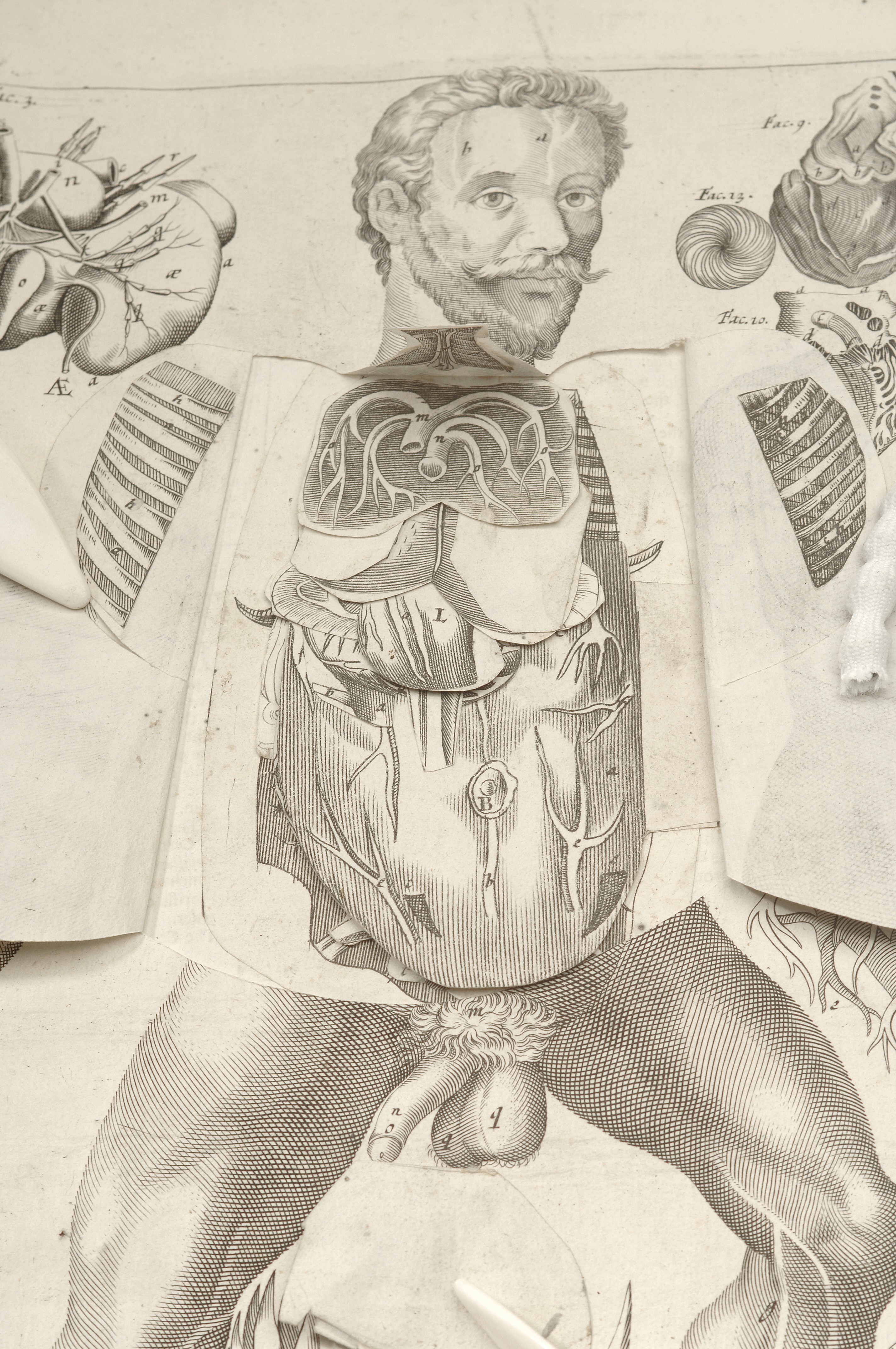 File:Male anatomical figure. View of internal organs Wellcome ...
