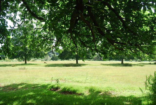 Parkland scenery, Knole Park. - geograph.org.uk - 857593