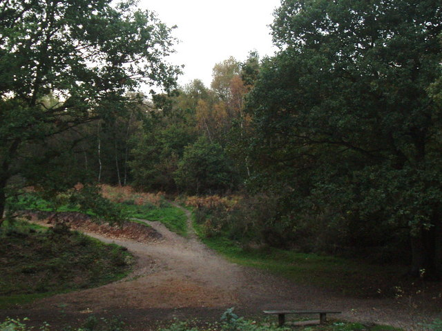 Paths diverge, Mousehold Heath - geograph.org.uk - 277052