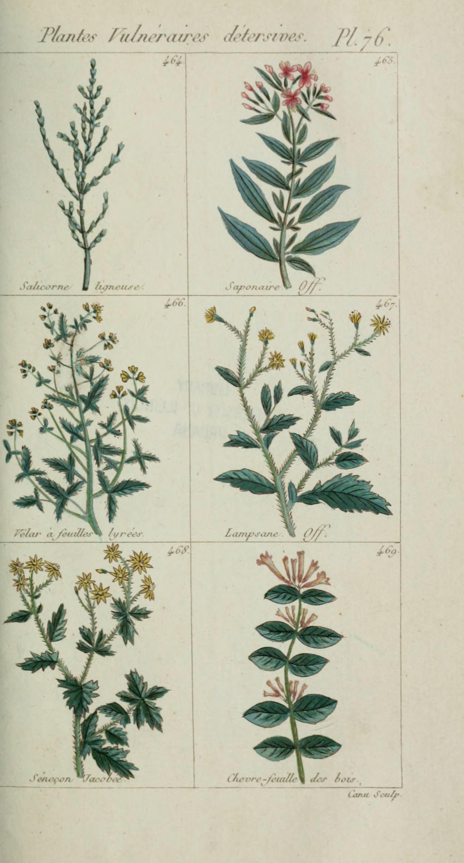 File plantes usuelles indig nes et exotiques pl 76 for Plante exotique