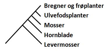 Stængelplanter (Embryophyta)