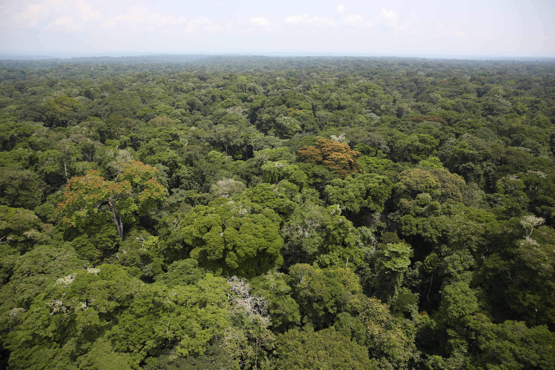 L'immensità della foresta del Congo