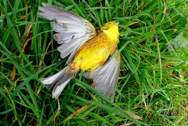 Road Traffic Accident Victim - geograph.org.uk - 1259773.jpg