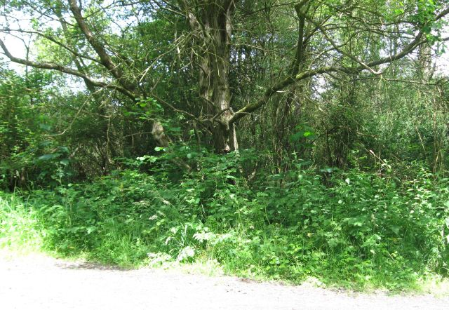 Side of Pembrey Forest - geograph.org.uk - 853865