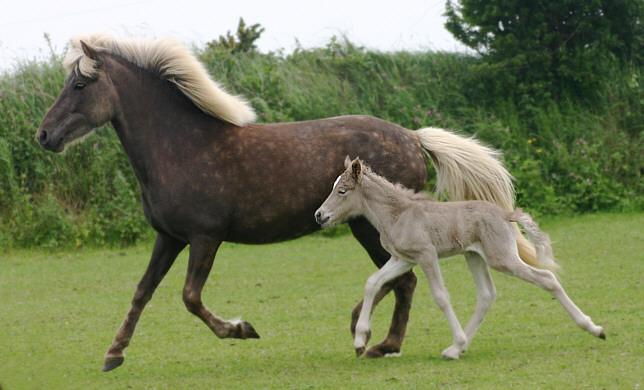 beautiful baby horses wallpaper