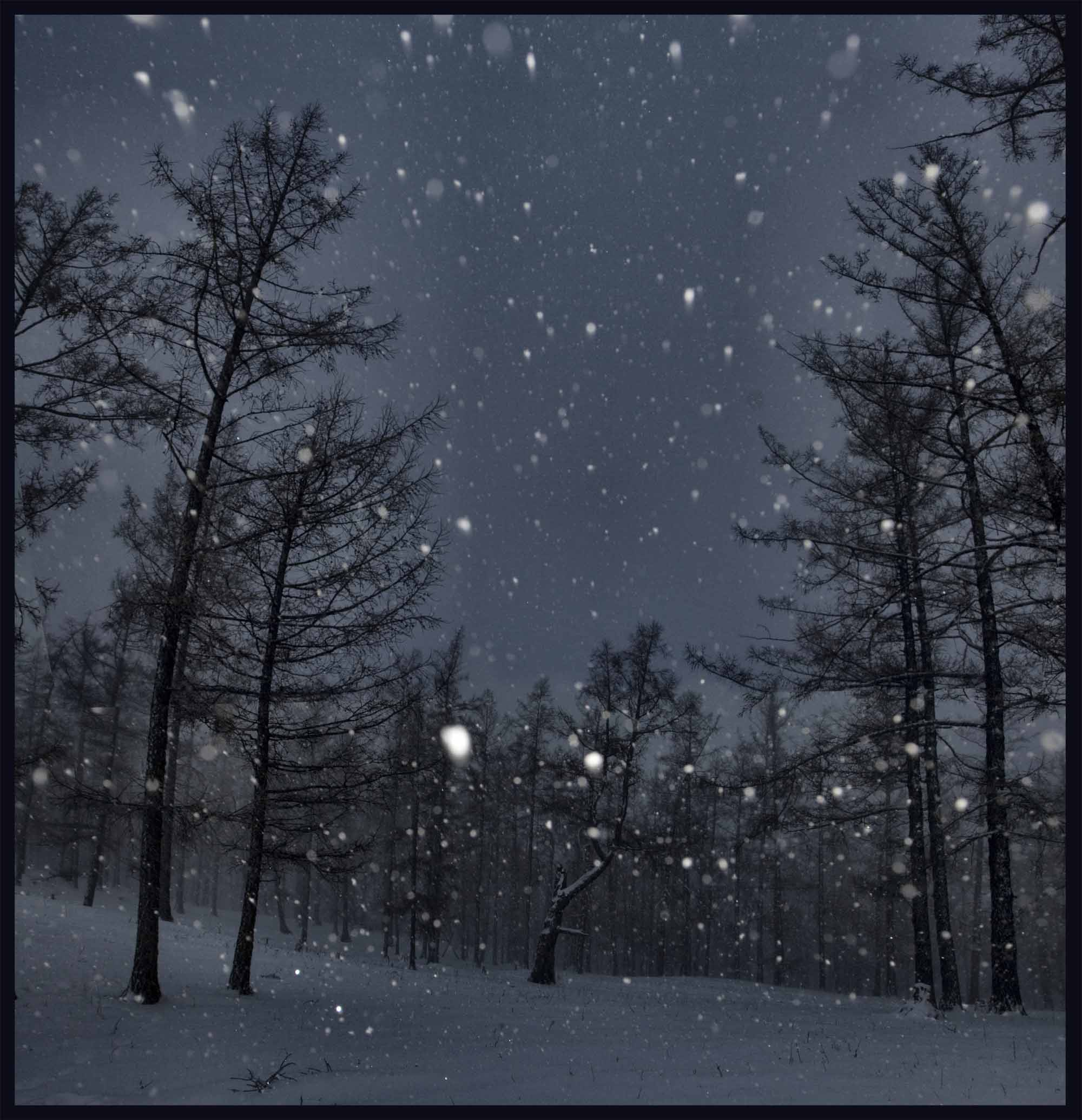 фото зимы ночью идет снег для рекламной