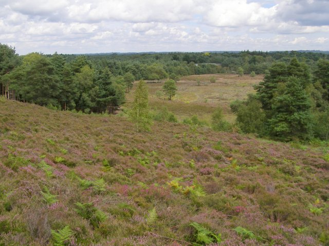 Sopley Common - geograph.org.uk - 515006