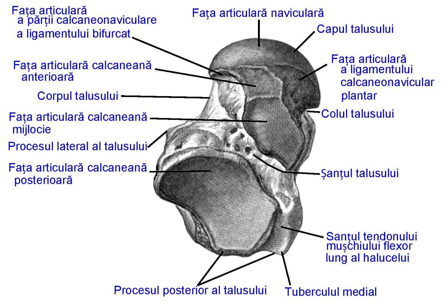 Talus - Wikipedia