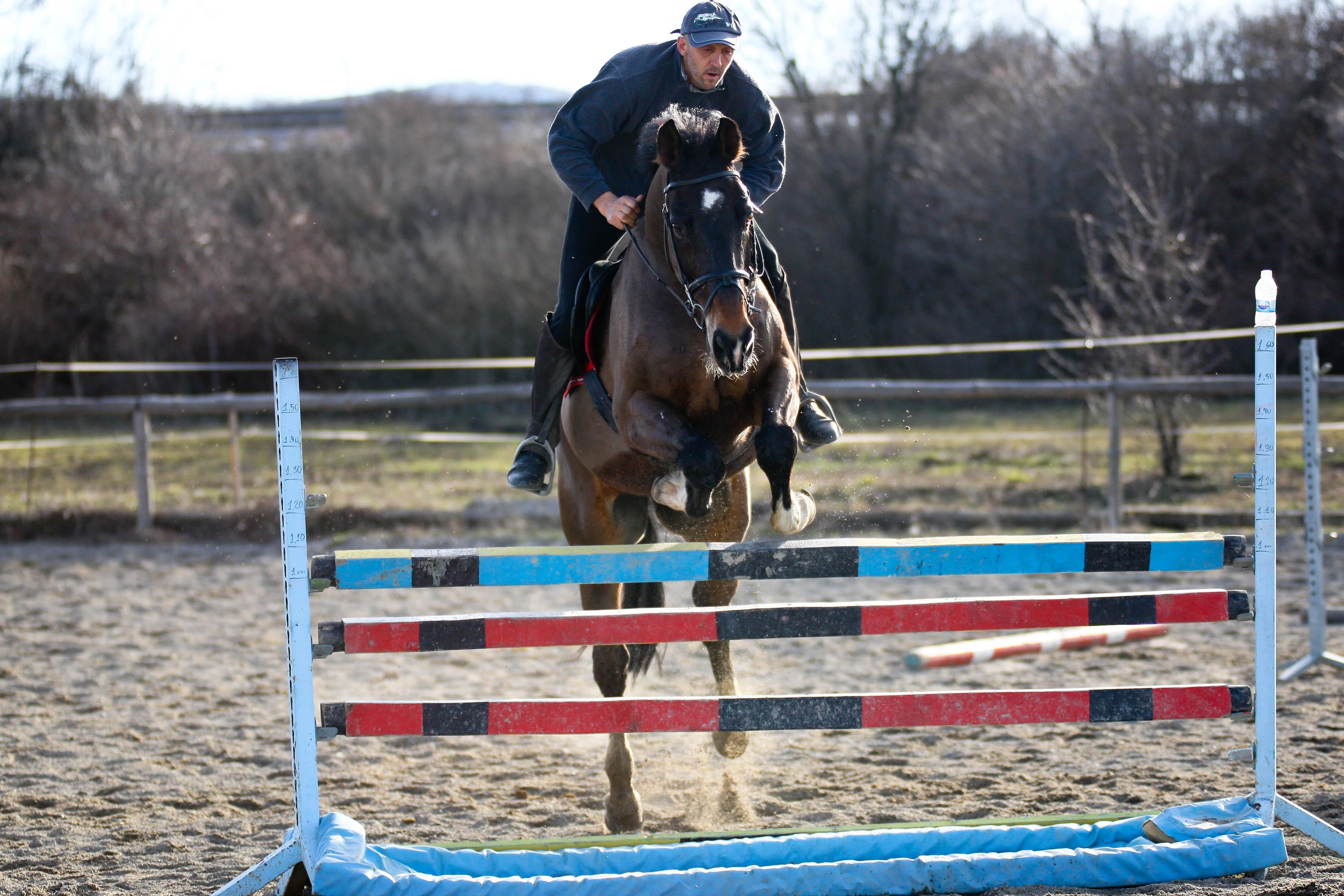 File Training Horse Jumping Jpg Wikimedia Commons