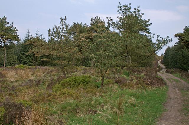 Woodland on Longridge Fell - geograph.org.uk - 449824