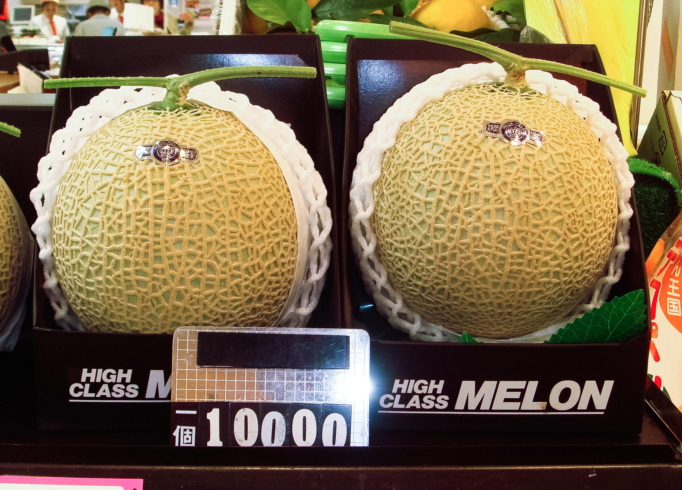 بطيخ melon ثمنه 10 آلاف ين للقطعة  مخصص لتقديمه كهدايا. 20080317-100-dollar-muskmelon