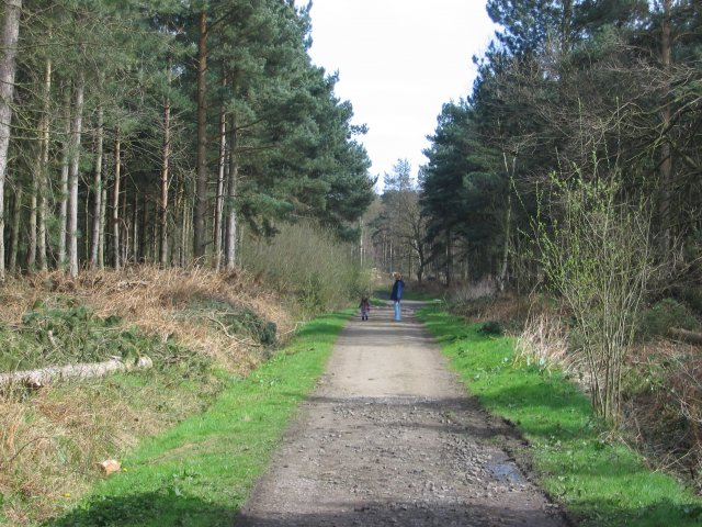 Allerthorpe Wood - geograph.org.uk - 5383