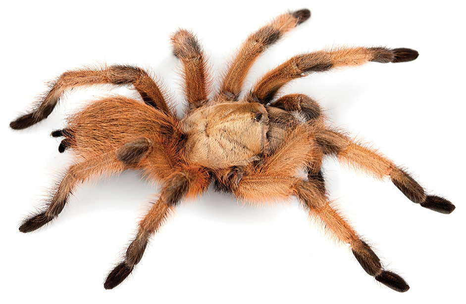 World Spider Catalog Natural History Museum Bern